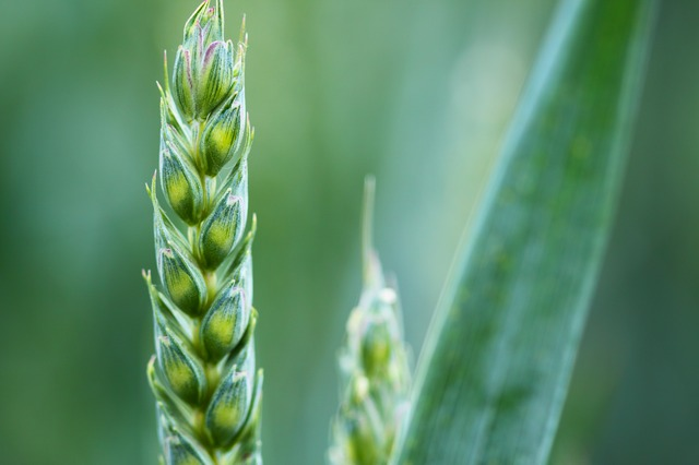 agriculture-2229_640