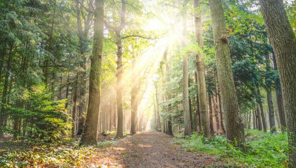 sunlight, path, hope, 2021