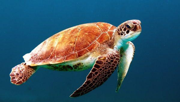 turtle-ocean-ekoru-search